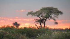 African Sunset - Chobe